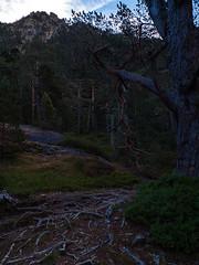 Camino al Lac de Gaube (Manolo Moliner) Tags: walking pyrénées pirineos randonnée cauterets midipyrénées hautespyrénées pirineocentral