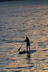 Golden standup (mfeingol) Tags: seattle sunset evening gasworks seattleflickrmeetup standuppaddler stroll1509