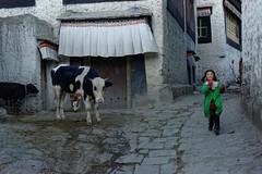 Green as grass, Tibet 2015 (reurinkjan) Tags: portrait picture photograph portraiture tar streetview portrayal streetshot likeness 2015 tibetangirl tibetautonomousregion streetcow  tibetanplateaubtogang tibet girlbumo gyantscounty gyantse facedongpa dong dongkha facecolordongdok janreurink  gyantseoldtown