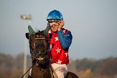 Runion de Vincennes - 2 novembre 2015 (sebastienpeguillou) Tags: horse sport race cheval nikon course 300mm nikkor equestrian turf vincennes chevaux hippodrome hippique quitation d3200