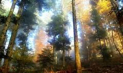 Mi-soleil, mi-brouillard (mamietherese1) Tags: pixelistes world100f phvalue fleursetpaysages universeofphotography
