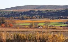 Vignobles de Villeveyrac en automne - IMG_5318 (6franc6) Tags: automne paysage 34 languedoc dcembre hrault 2015 favoris villeveyrac 6franc6