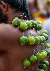 A Pierced Devotee Laden With Lemons On His Back During The Thaipusam Hindu Festival At Batu Caves, Southeast Asia, Kuala Lumpur, Malaysia (Eric Lafforgue) Tags: shirtless pierced people man men festival vertical closeup fruit religious outdoors photography lemon asia southeastasia day adult indian faith religion ceremony garland piercing parade celebration event malaysia devotion pierce hanging ritual kualalumpur spirituality rearview tradition devotee endurance hindu hinduism malaysian bodypart cultures abundance foodanddrink pilgrimage batu adultsonly batucaves thaipusam hindi oneperson carrying selangor decorated penance 40sadult onemanonly colourimage 1people unrecognizableperson kl337