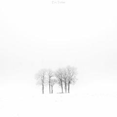 """""""L'arbre, comme l'homme, s'affine en société. """" (erictrehet) Tags: hiver arbre minimalisme winter bretagne illeetvilaine white black noiretblanc noir blanc brume brouillard paysage landscape d610 fx nikon"""