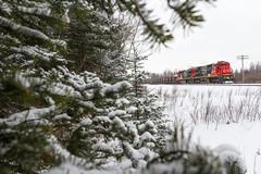 T-Bird in the Snow (Ryan J Gaynor) Tags: canadiannational cn snow train railroad railfan limestonetrain pine tree trees ultrawideangle freighttrain gec408 cloudy snowy