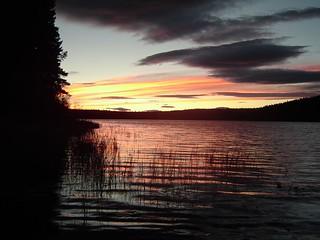 British Columbia Wolf Hunt & Big Game 23