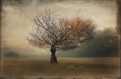 Trees seem to emanate a sense of permanence. (Bessula) Tags: bessula tree landscape scenic creation texture cruze photomanipulation art php