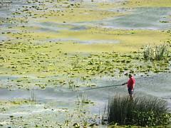 Fisher (markb120) Tags: fisherman fisher banker fishman fishingrod rod fishrod river dnieper duckweed cane reed rush thatch frail alga waterplant wrack