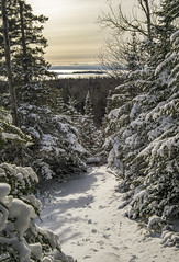 Leaving the Woods (Portraits of Nature) Tags: snow trees landscape trails sky lake islands outdoors