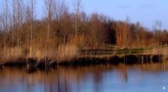 Schinveldse bossen (mia_moreau) Tags: landschap water bomen kleuren miamoreau schinveld zuidlimburg sony reflectie nederland limburg schinveldsebossen bos natuur