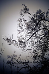 IMG_9974 (outsideartimages) Tags: frost fog winter foliage trees buds moss photography mono bare