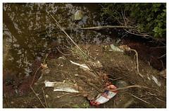 Pasadena_0076 (Thomas Willard) Tags: california pasadena storm drain runoff water trash