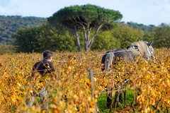Fondugues Pradugues III (::YS::) Tags: fondugues pradugues vineyard yann savalle domaine ramatuelle winery vin viticole saint tropez france vignoble provence sainttropez bio farming pampelonne beach biodynamic organic wine noir et blanc monochrome bordure photo cheval