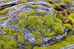 Mossy Eye (David Badke) Tags: colwood bc moss