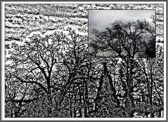 1 - Ciel d'hiver (melina1965) Tags: 2017 février february bourgogne saôneetloire saintvallier burgondy nikon coolpix s3700 winter hiver mosaïque mosaïques mosaic mosaics collage collages arbre arbres tree trees ciel sky nuage nuages cloud clouds contrejour againstthelight