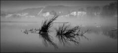1991_0496-21_spot_20160829-3 (Réal Filion) Tags: beauce québec canada eau inondationarbre désastre nature environnement rivière river water flood tree disaster environment noiretblanc blackandwhite