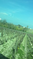 IMG_2940 (burde73) Tags: lafite rothschild chateau bordeaux andrea gori chiara giovoni