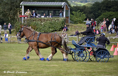 Chevaux de trait attelés CORLAY (claude 22) Tags: concours attelage corlay chevauxdetrait cheval chevaux caballo paard paarden άλογο cavallo cavalli cavalo breizh bretagne brittany horse animal farm
