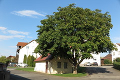 Drnhof am 31.08.2015 (pilot_micha) Tags: tree germany bayern deutschland bavaria dorf village baum deu kastanie unterfranken kastanienbaum jugendraum badneustadt rhngrabfeld drnhof jugendraumdrnhof
