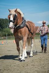 DSC_5227 (Ton van der Weerden) Tags: belgi be paard paarden nationale vlaams waregem vlaanderen 2015 prijskamp