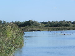 file14261 (Gianluigi Roda / Photographer) Tags: landscapes delta waters waterbirds waterlands