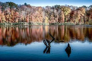 Sinking Ponds Nature Preserve