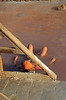 MAR MENOR 15 0127 copia (Cazador de imágenes) Tags: españa woman beach girl female del mar donna mujer spain san cu chica mud candid playa lo murcia pedro bikini baths bain marmenor baño barro spanien menor spagna spanje pagan ragazza lodo schlamm baie spania barros lodos boue spange lopagán pinatar lopagan modderbad namol fangoterapia मिट्टी gyttjebad terapéuticos चिकित्सा