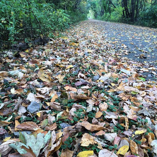Fall in Indiana.