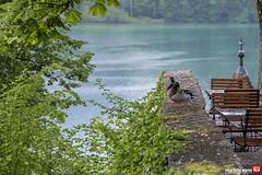 AA9I5524 () Tags: lakebled slovene