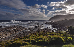 The indian ocean (Fil.ippo) Tags: panorama seascape bird water backlight landscape southafrica waves indianocean hdr filippo sudafrica sigma1020 tsitsikammanationalpark d5000 filippobianchi