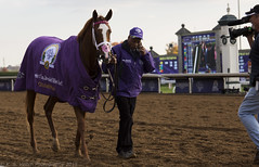 Catch a Glimpse - Breeders' Cup Juvenile Fillies Turf Stakes Gr.1 (Winner) (K. S. Veitch Photography) Tags: lexingtonky horseracing keeneland racehorse worldchampionship grade1 breederscup cityzip catchaglimpse markcasse bc2015 breederscupjuvenilefilliesturfstakes 2015breederscupwinner