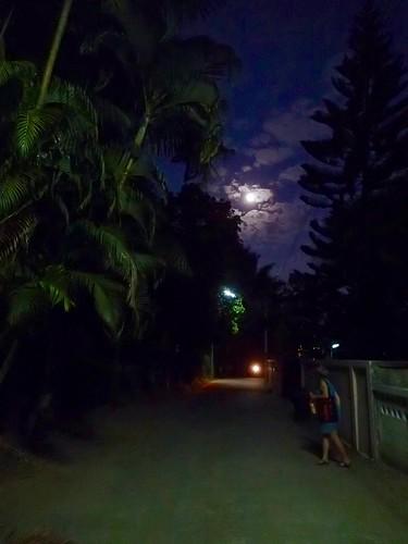 moonlight walk down the lane