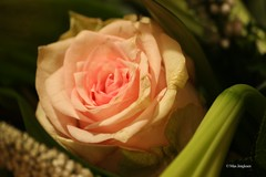 Flowers (Max Jongkoen) Tags: flowers bloemen bouquetofflowers bloem boeket