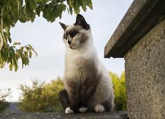 Snidget (tiki.thing) Tags: morning white wall cat snidget