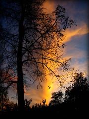 Trees at sunset near Villa Vauban, Luxembourg (Wagsy Wheeler) Tags: luxembourg luxembourgcity silhouette tree trees nature clouds cloud orange sky park outside outdoor villavauban museum dusk sunset parcmunicipal