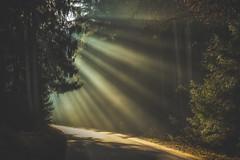 Road to Enlightenment (Stefan (ON/OFF)) Tags: road forest raysoflight sunrays sunbeam sunbeams light sunlight sunset sunrise sundown rays raysofgod godrays lichtstrahlen sonya7 sonya7m2 sonyalpha7markii sony a7ii sonya7ii sel55f18z zeiss 55mm sonyfe5518