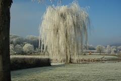 An der Weser (ute_hartmann) Tags: baum raureif frost lippoldsberg