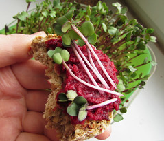 (100% raw) vegan toast bread (GF) (tarengil) Tags: food raw vegan veggie vegetarian vegetables onion garlic olive carrot toast bread beetroot spread sprouts radish foodporn health healthy recipe red green dish