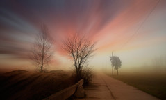 fog (augustynbatko) Tags: fog nature autumn landscape view trees sky clouds road