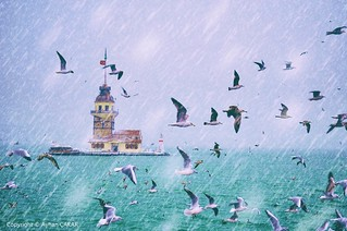 Wintertime Maiden's Tower and Seagulls