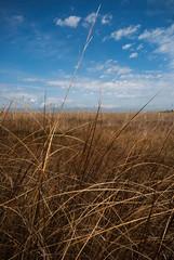 Parc Naturel du Delta de l'Ebre, Espagne (stephaniedarriet) Tags: ciel nuage herbe