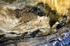 Punta Baltazar, Jaizkibel, Pays Basque, Espagne (Christian Giusti) Tags: géologie geology géomorphologie geomorphology géographie geography géographiephysique physicalgeography flysch cénozoïque cenozoic crétacé cretaceous patrimoinegéologique geologicalheritage météorisation weathering geoheritage