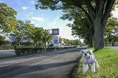 1010テオPRO27366 (photojiro) Tags: 10月 fujifilmxpro2 fujifilm fujinon xf18mmf2r テオ 単焦点レンズ 晴れ 東向き 秋 長野運動公園