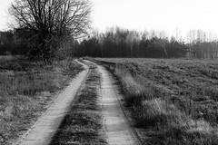 *** (pszcz9) Tags: polska poland przyroda nature natura pejzaż landscape beautifulearth bw blackandwhite monochrome czarnobiałe mazowsze masovia sony a77 droga road