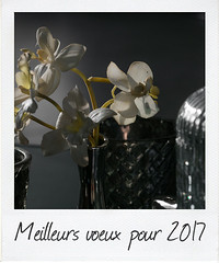voeux 2017 (objet introuvable) Tags: newyear year wishes flowers fleurs flower lumière light reflets reflects canon70d canon 2017
