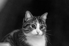 Pallina 1407 (Federico Basile FB Photo Images) Tags: gatto gatta gattina gattino gattini animale felino pallina cucciolo cucciola azione verde neve salto coccole fusa giochi cat smallcat cats cute sweet sweetcat