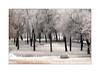 parque nevado (Ramón Medina) Tags: valladolid castilla invierno winter nieve snow parque park árboles trees banco bank painterly blur e icm intentionalcameramovement impresionista impressionistic