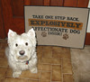 """1/12B ~ Riley asks """"Who, Me?"""" (ellenc995) Tags: riley westie westhighlandwhiteterrier 12monthsfordogs17 mat alittlebeauty coth thesunshinegroup coth5 fantasticnature rubyphotographer abigfave sunrays5 supershot challengeclub akob pet100 pet500 thegalaxy 100commentgroup"""