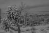 Exploring Arizona (Barb McCourt) Tags: saguarocactus saguaronationalpark tucson arizona mountains sky desertsouthwest desertlandscape desertvegetation desertphotography blackandwhitephotography blackandwhite bnw bw nikond7200
