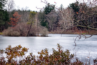 Frosted Pond